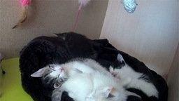 Cute Kitten Webcam
