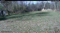 Deer Cams
