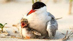 Tern Cam