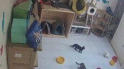 Ecuador Rescate Animal Shelter