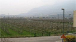 Rovereto Webcam