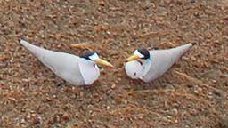 Wetlands Bird Cam