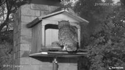 Spotted Owl Nest Cam