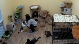 Dobrij Dom Cat Shelter