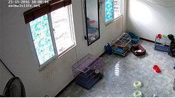 Hanoi Pet Rescue Animal Shelter