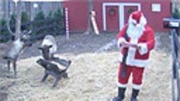Reindeer Cam