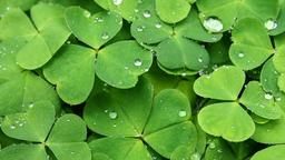 St. Patrick's Day Cams