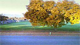 Sunnyvale Webcam