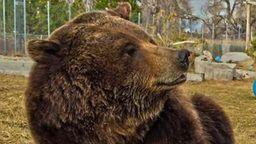 Montana Bear Cam