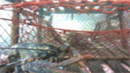 Nova Scotia Lobster Cam