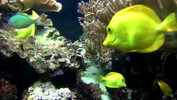 EarthCam: Tropical Fish Cam