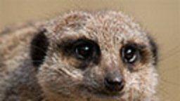 Paignton Zoo Cams