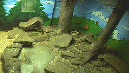 Punxsutawney Groundhog Cam