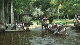 Bali Elephant Cam Bathing Pool