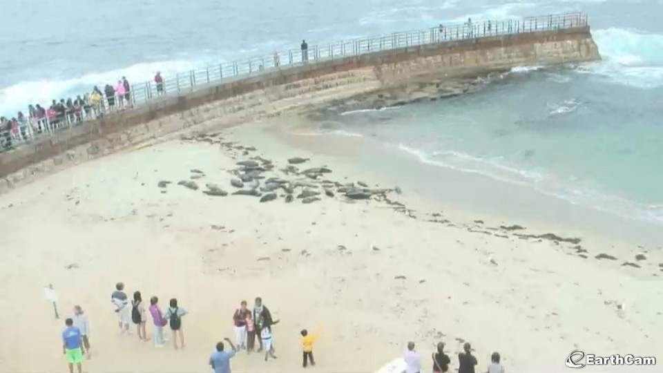 sea colony beach cam