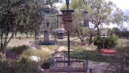 Castroville, TX BirdCam